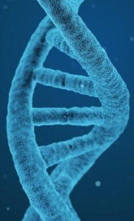 Ταυτοποίηση DNA